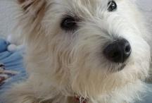 Paupiettes / Cat, dog, animals,