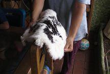 allabout rabbits
