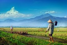 Beauty of Indonesia