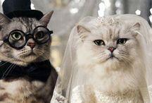 Cat Lover's Wedding