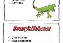 Unit Studie reptiles