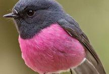 Birds / Colourful Birds