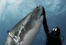 Shark Week / by Melody Marshall
