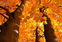 Fall / {fall // autumn // mother natures finale} / by Amanda Oakes