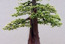 bonsaie