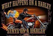 HARLEY'S THE ONE !!!! / by Doreen Avola