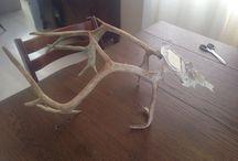 Antlers / Gevir / Project antlers from reindeer.