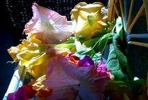 Flores / Flores diversas