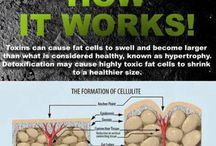 Formation cellulite