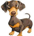 dachshunds / by Janice Pace