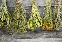 βότανα -θεραπεία
