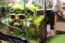 Reptile Terrariums
