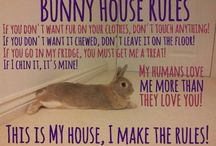Bunny memes