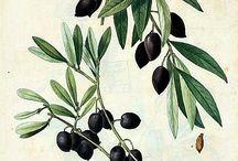 Textiles: Botanical