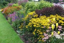 herbacious borders