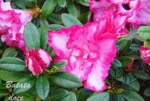 Jardinagem na horta / Dicas para o #jardim, #plantas de interior e para a #horta