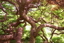 Entangled / Tangled & Twisted Branches & Roots / by Linda McHardy