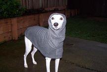 Whippet English Style Fleece Dog Coats / Nancy's Dog Paws Boutique Custom Fleece Dog Coats