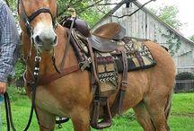 Mules, Donkeys and Horses