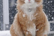 Cats In Snow!