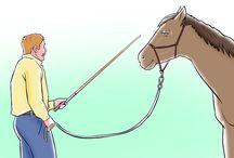 horses and training
