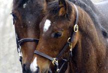 Horses / Beautiful Horses / by Jeff Peck