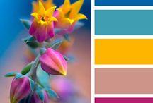 colours scheme CMY