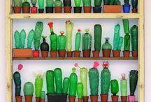pango ❤ cactus