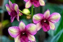 Naturalne piękno / O kwiatach, krzewach,drzewach i ogrodach