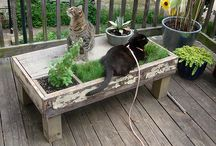 Do. Pet Stuff / things to make for cats, dogs, fish, etc.  And some just plain cool pet stuff... / by Kathy Golden