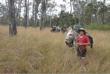 Donkey Trekking / The DONKEY TRAVELS pages of www.donkeytime.org are packed full of donkey trekking organisations around the world.