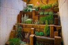 Carina garden