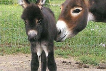 Donkeys are delightful / by Donna Miller