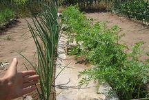 ДАЧА см ферма, Хава, агротуризм, сад огород