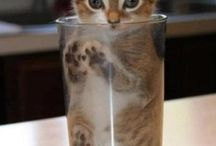ねこ/cat