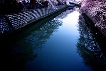 桜-sakura- / 2013年の桜