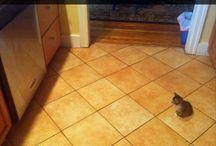 τοσοδουλι γατακι