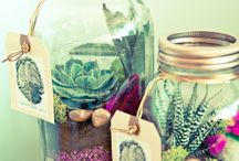 Terrariums, mini gardens & bottle gardens! / by Joanna Daoud
