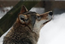 Animals  / by Laura Robinson