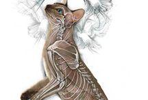 Anatomia kotów