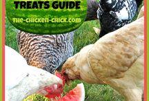 Farming / Chickens