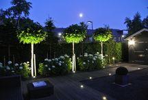 Ljussättning trädgård