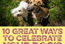 Birthday Party Ideas For Furry Kids / Some boards to help parents like me with furry babies :)