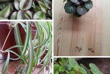 tuin en planten