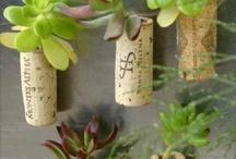 plants / by Anastazia Ford