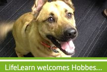 Furry LifeLearners / Our four-legged teammates keep us on our toes!