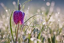 My Dream Garden / by Coralee Schindel