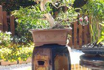 my new zen garden