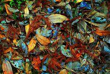 Art / Plants / My work. Conputer Graphics