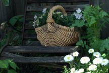 GARDENS/Plants/ LIVING 2 / by Di Bodenham